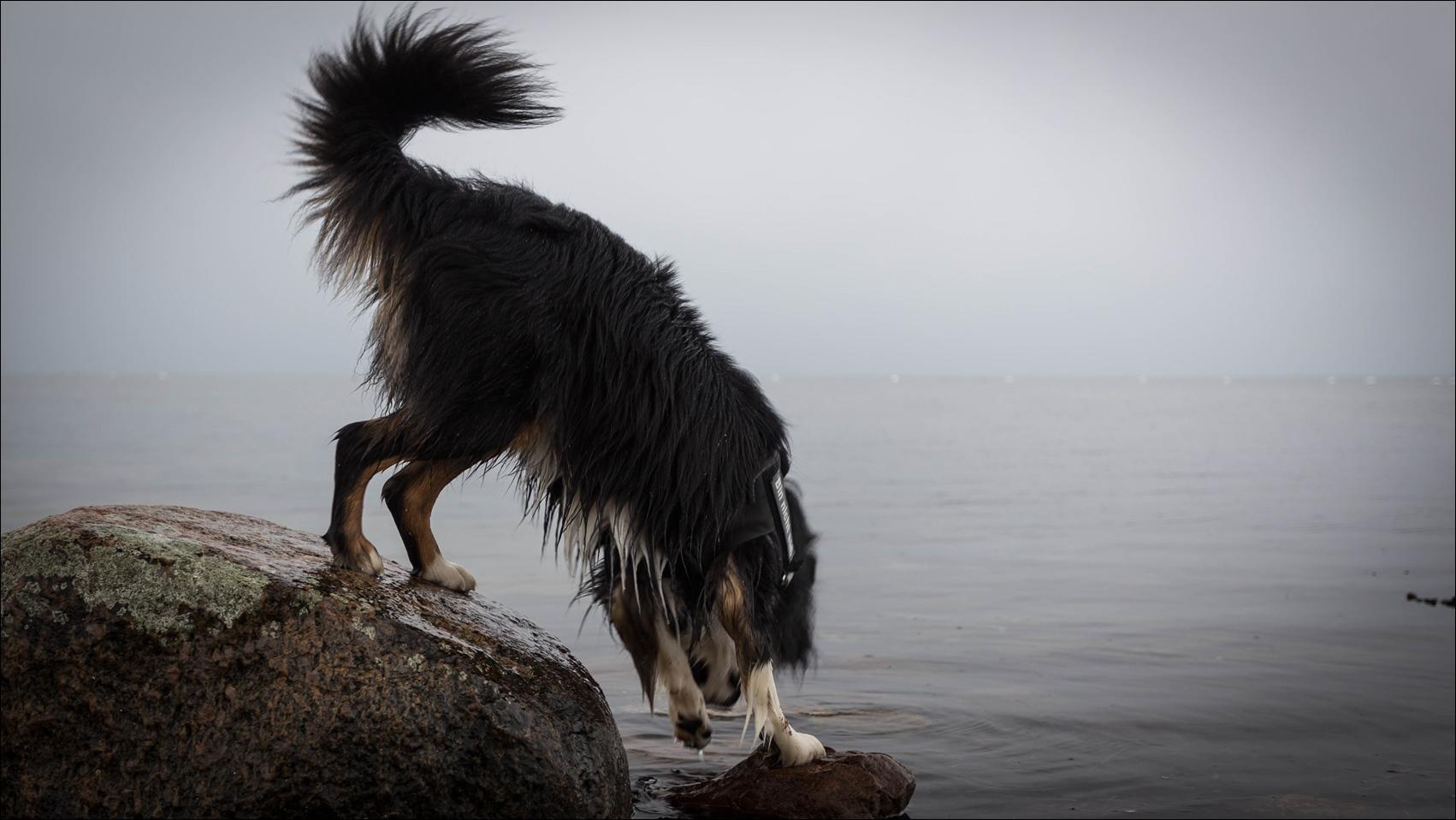 Benny in der Bucht