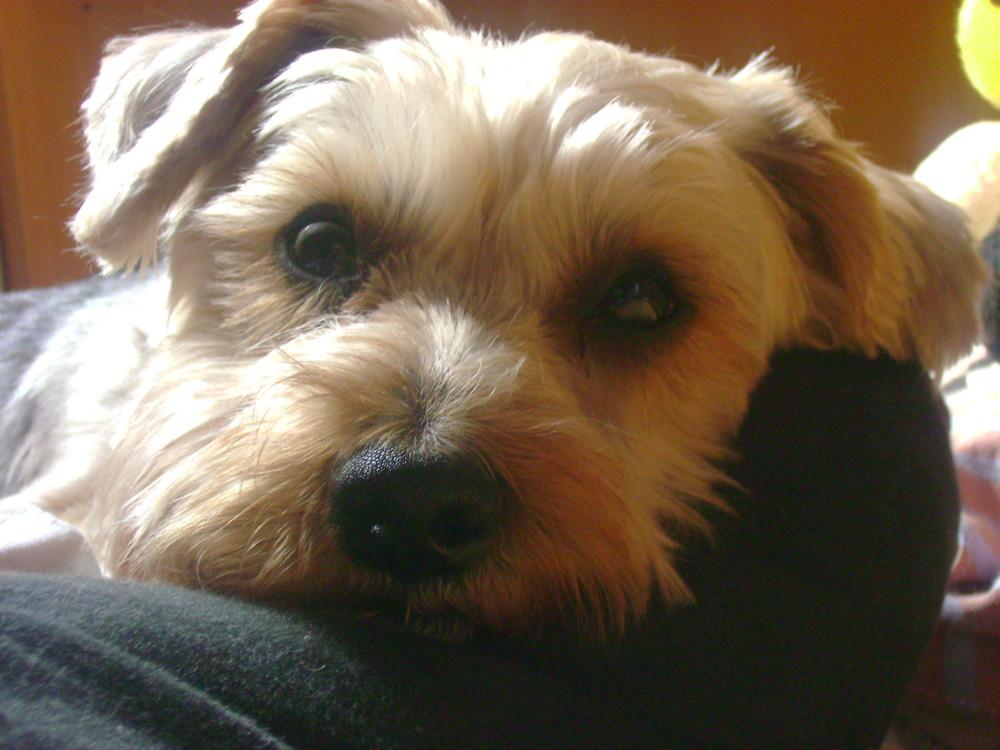 Benny mein Kleiner Hund