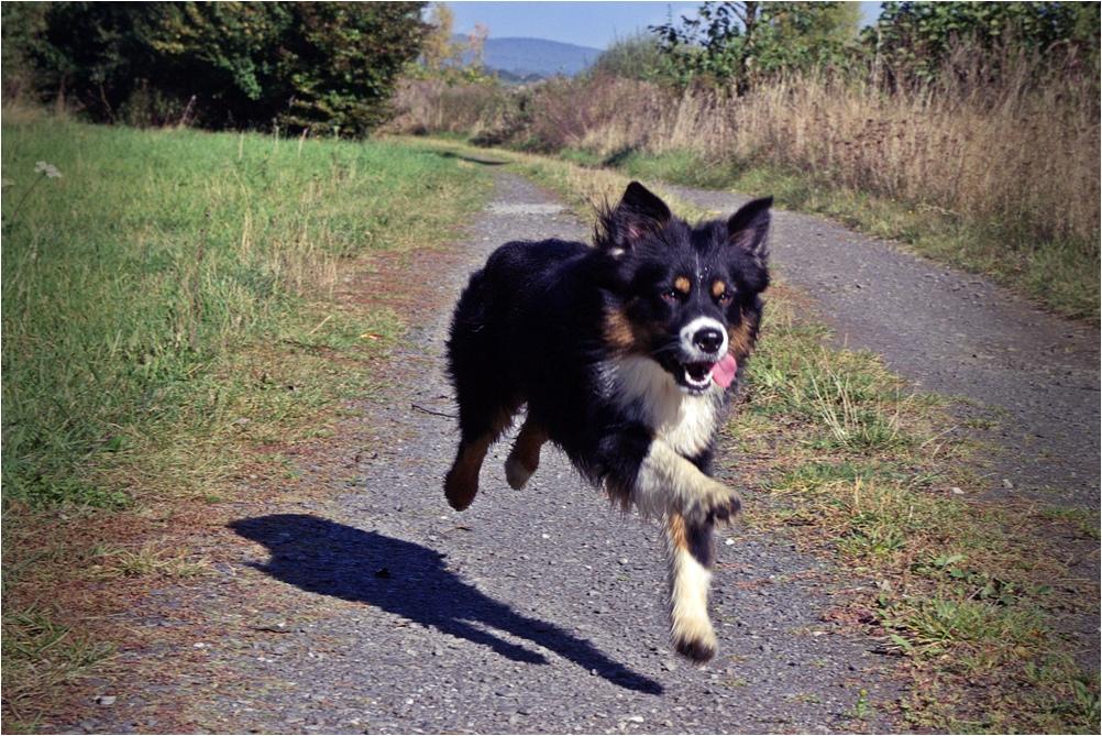 Benny rennt