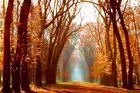 Bentheimer Wald 23.10.07