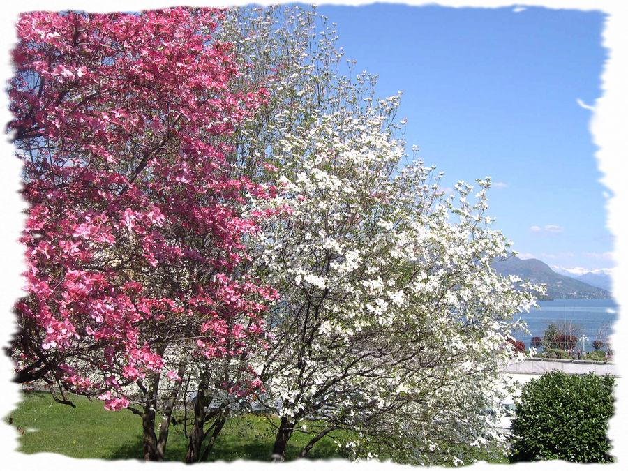 Bentornata Primavera!
