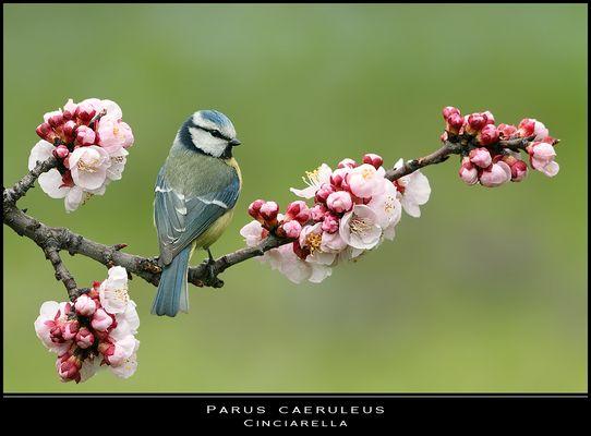 Benvenuta primavera...