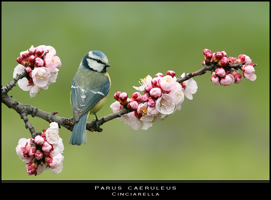 Benvenuta primavera foto immagini animali uccelli - Primavera uccelli primavera colorazione pagine ...