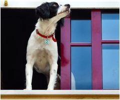 Beny, la mia vicina cagnolina.
