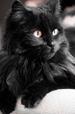 Beobachtende Katze
