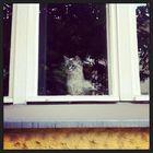 Beobachtende und wartende Katze