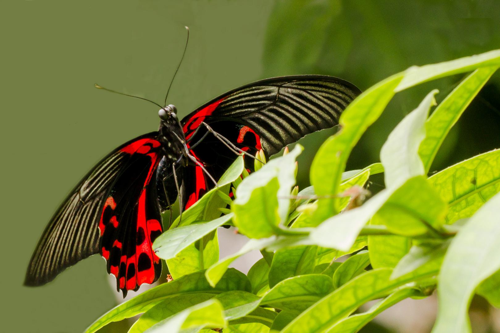 Beobachter im Schmetterlingshaus