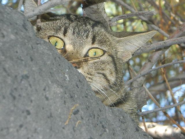Beobachtet