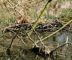 """Beobachtung im Naturschtzgebiet """"le Petite Camargue"""" 29.3.11 Nr.3"""