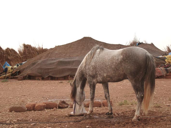 Berber und Berberzelt