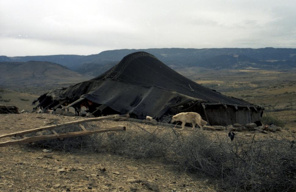 Berberzelt 1980 gescant vom Negativ