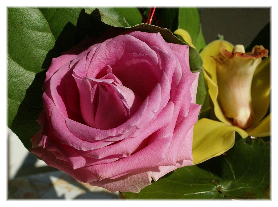 Bereits die Nr. 23633, eine Rose zum Muttertag