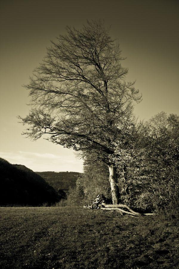 Berg-Baum-Tal