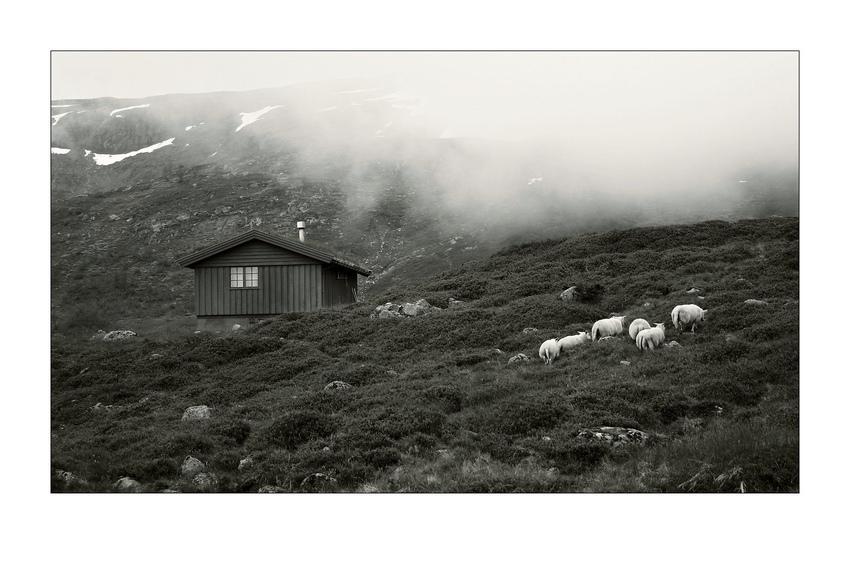 Berge. Nebel. Hütte. Schafe.