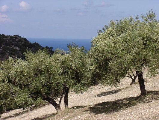 Berge, Oliven, Meer