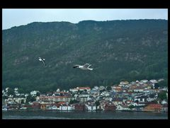 Bergen:sight from the sea
