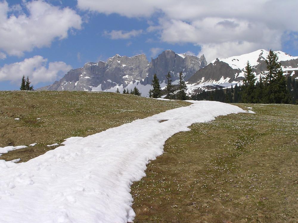 Bergfrühling im Prättigau: Blick auf Drusenfluh 2830m