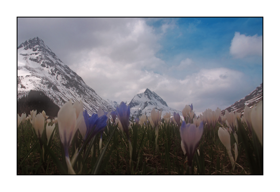 Bergfrühling in Tirol
