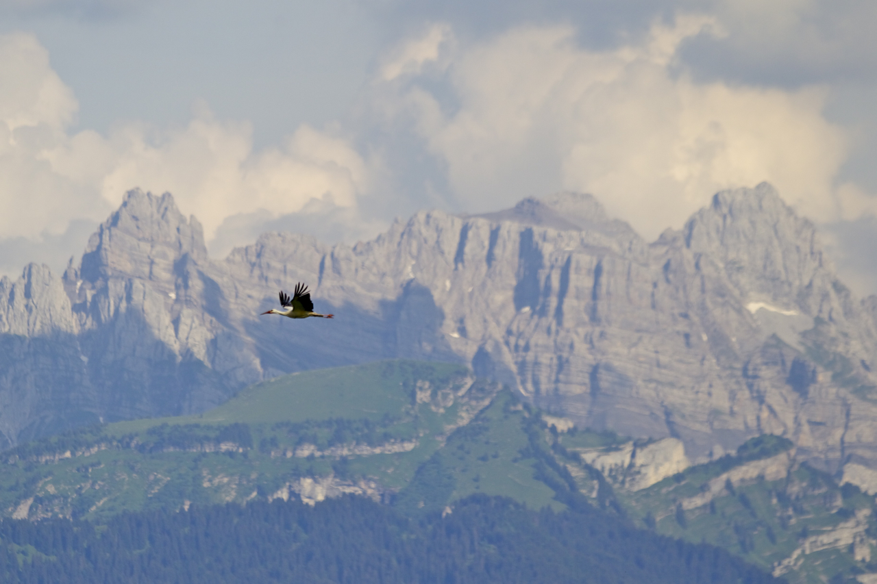 Bergkulisse mit ungewöhnlichem Besucher
