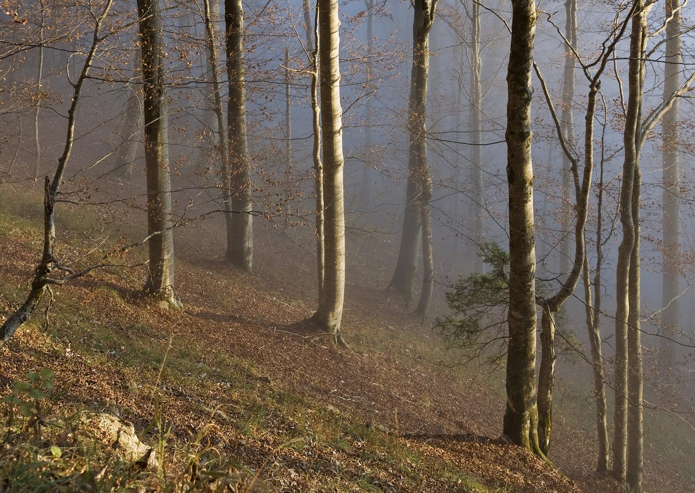 Bergwald 2