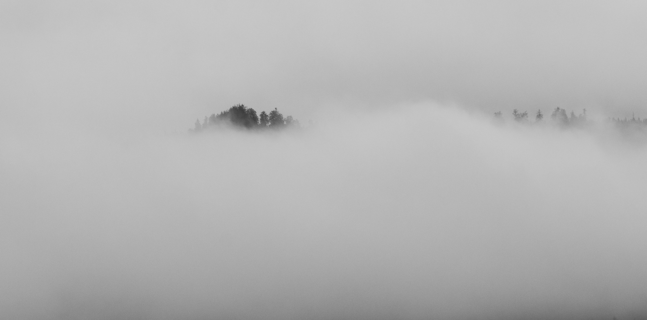 Bergwald im Frühnebel