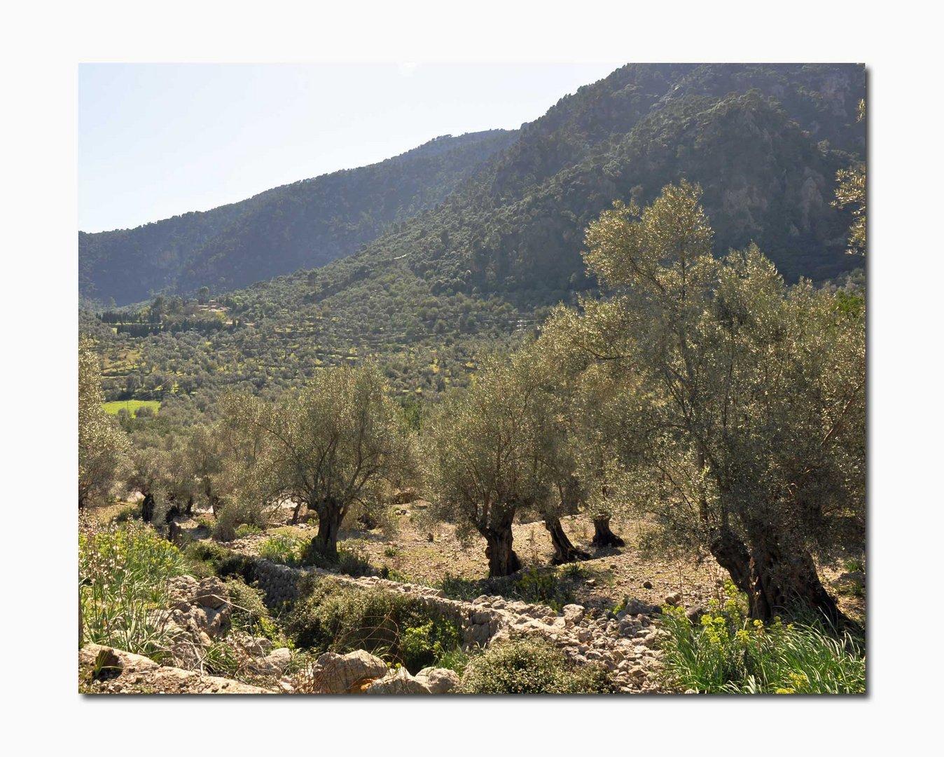 Bergwelten und Oliven