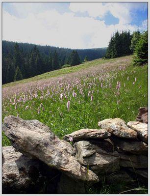 Bergwiese im Riesengebirge