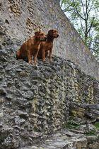 Bergziegen....äääh Hunde