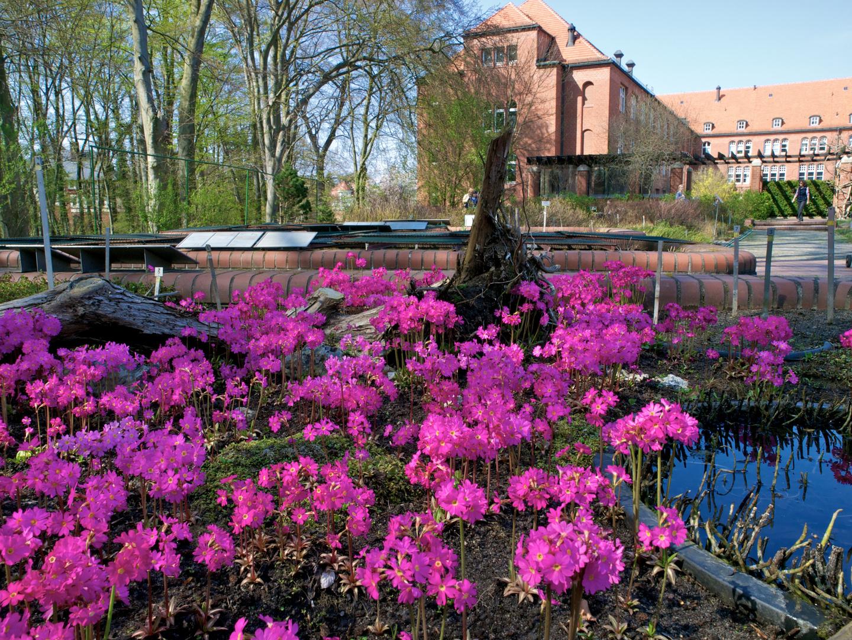 Berlin Botanischer Garten