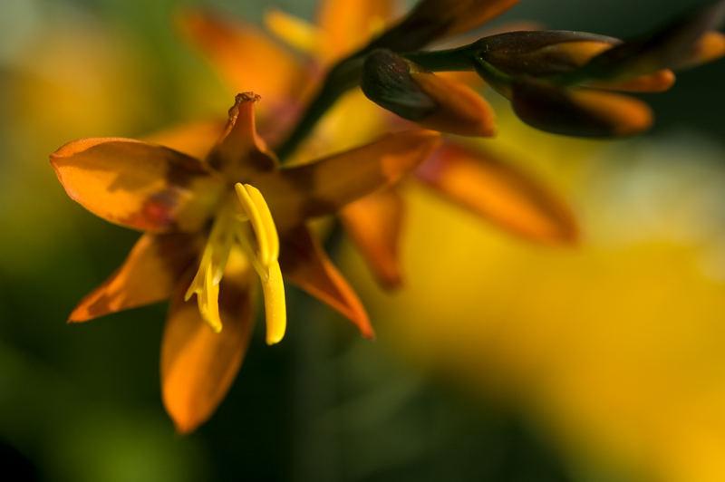 Berlin Flower