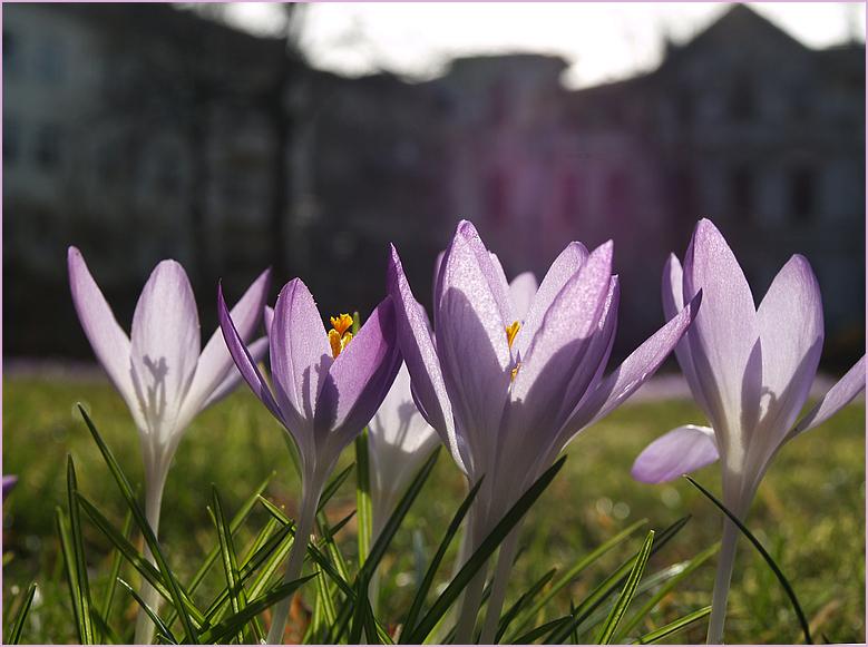 Berlin probt den Frühling