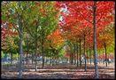 Berliner Herbst... de Reinhild Maria