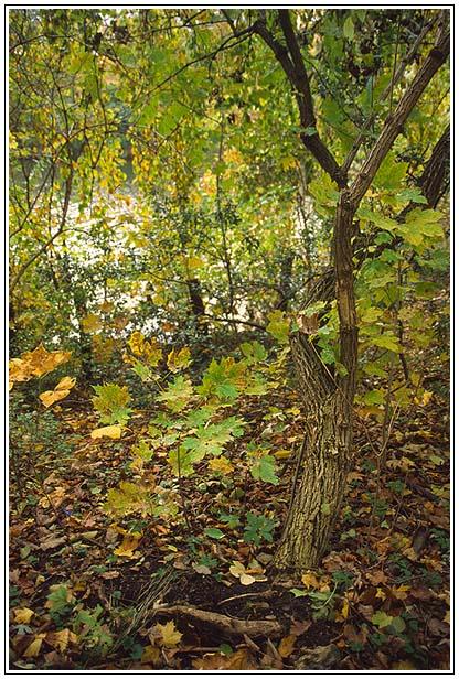 Berliner Herbst I