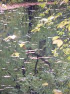 Berliner Tiergarten -3-