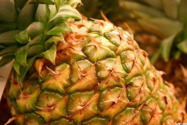 ::: Bermudas - Ananas :::