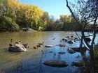 bernaches sur la rivière Des Prairies