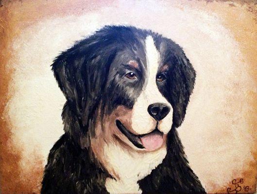 Berner Sennenhund Portrait
