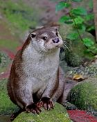 Bernhard der Otter