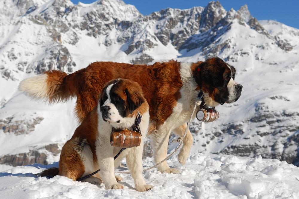 Rescue Dog To Super Dog Website