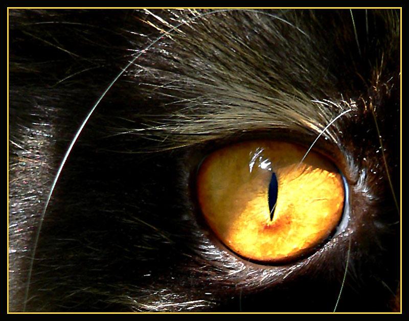 Bernstein-Auge