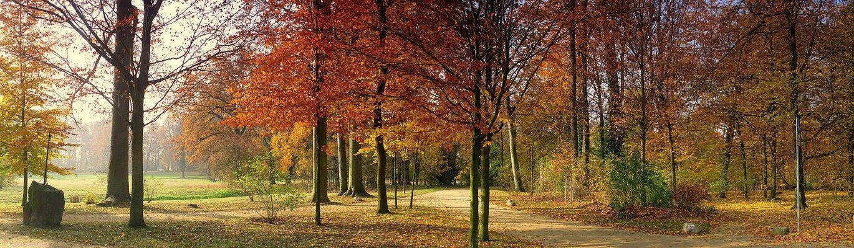 Bernsteinfarben des Herbst ..
