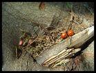 Berries in a fallen tree