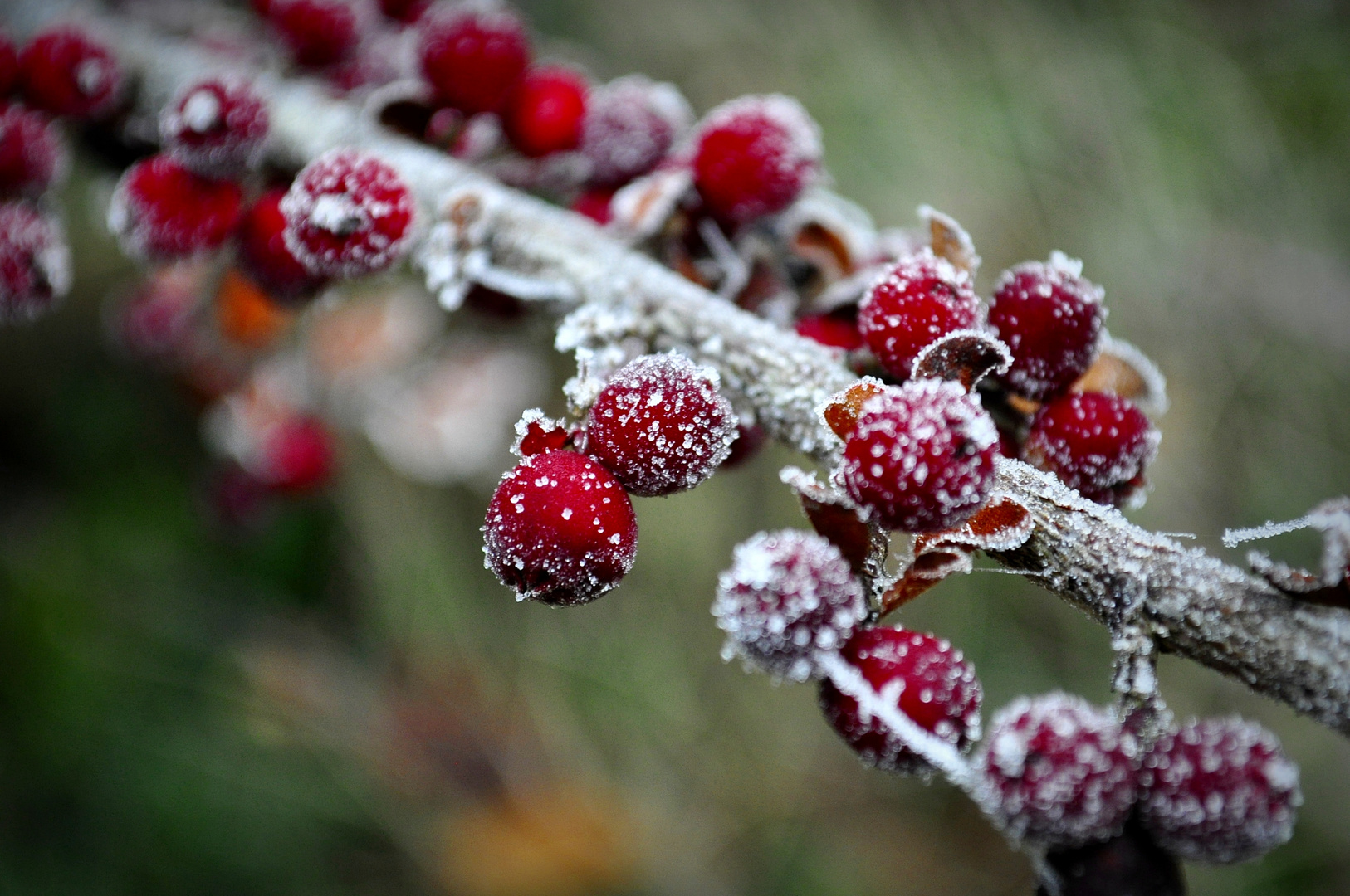 Berries On The Rock