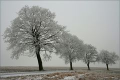 Erzgebirge 2009