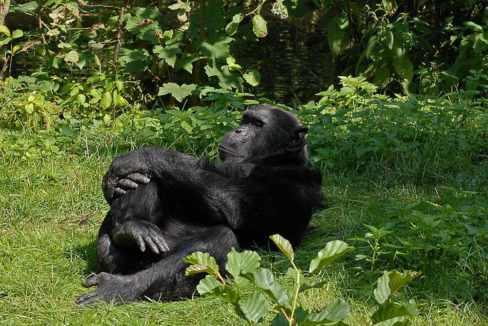 Beschaulicher Affenalltag