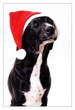 Besinnliche Weihnachten...