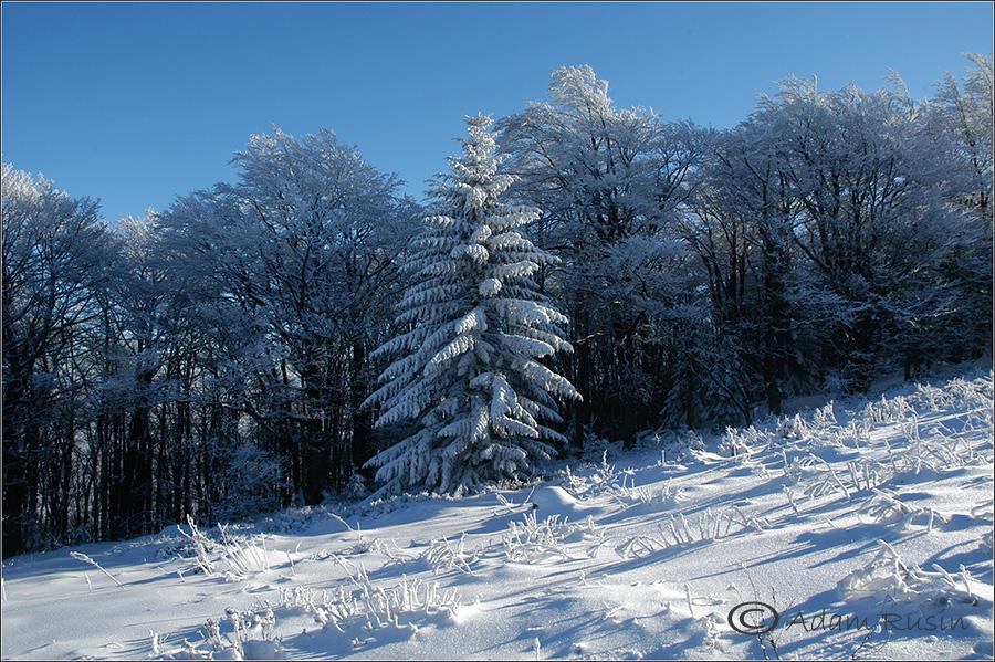 Beskiden im Winter / Polen
