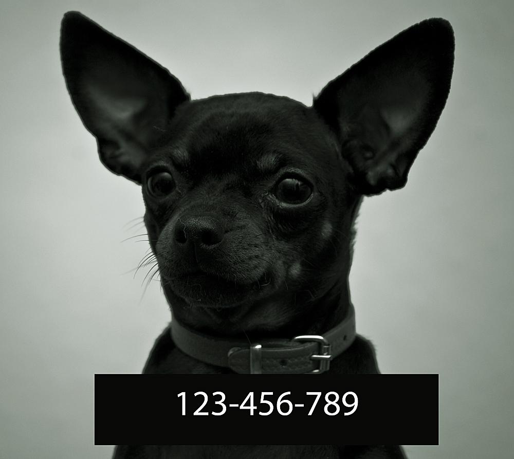 Besondere Kennzeichen: Ohren
