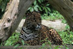 Bess die Jaguardame