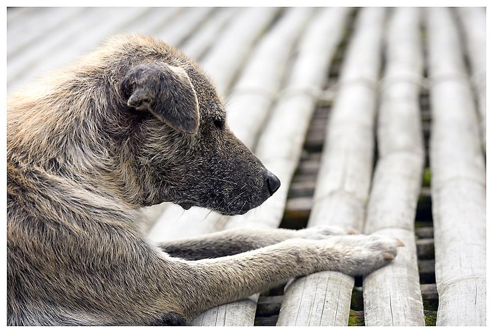 Besser einen Hund als Freund, als einen Freund, der sich als Hund herausstellt!  (Aus Rußland)